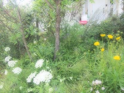 20170520_my_garden008