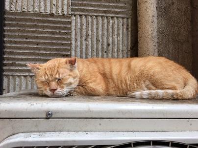 20170812_the_cat01