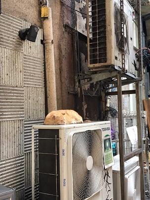 20170812_the_cat02