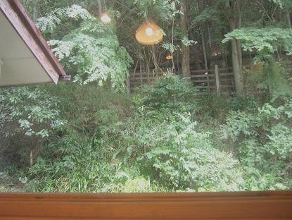 20170829_pine_tree_cafe04