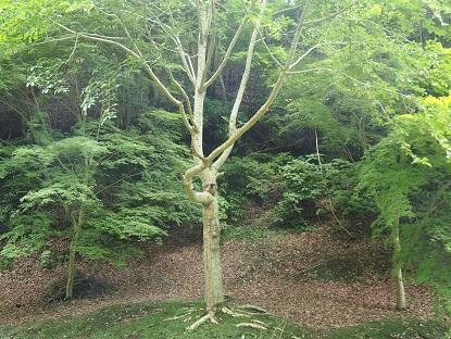 20171214_tree01