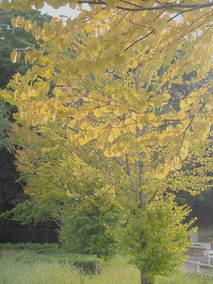 20180929_autumn001