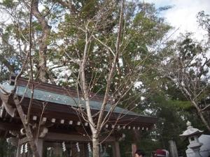20200102_tachibana_shrine002