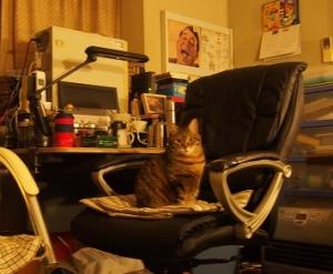 20200316_jazz_the_cat001