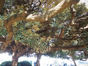 20210927_tree_001
